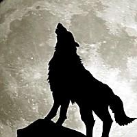 달달한늑대